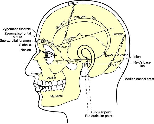 skull-40843_640