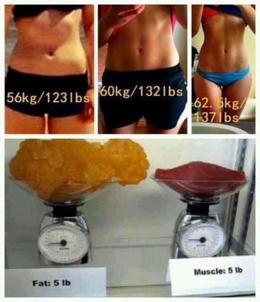 fat-v-muscle2